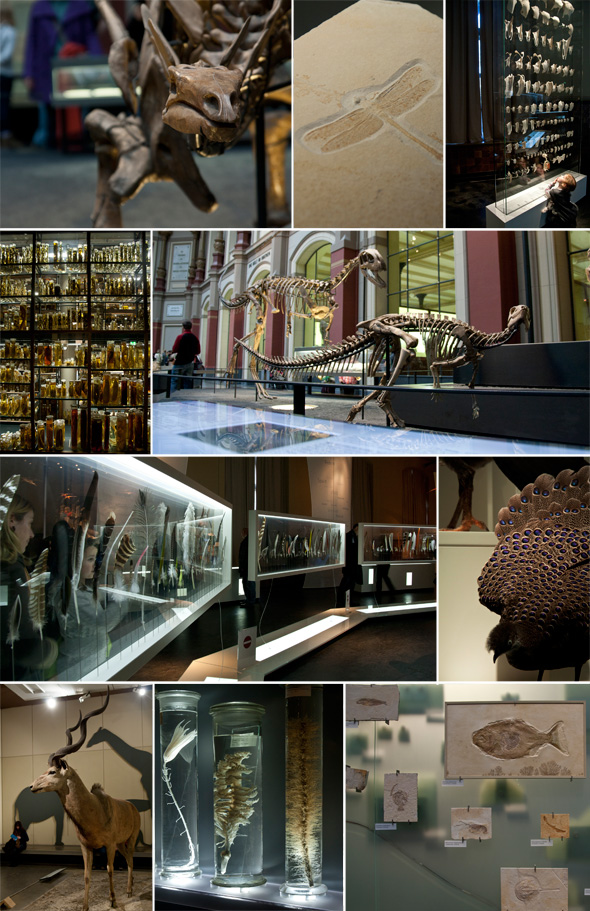 ein tag im naturkundemuseum