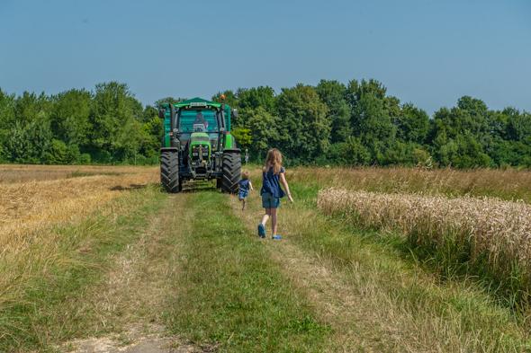 Weizenernte - Peter, Anna und der Traktor