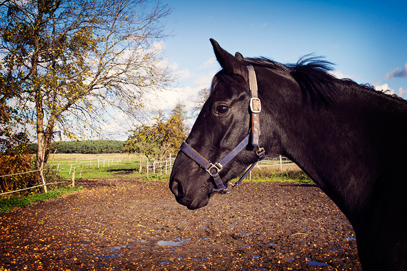 Hofgut Pferd