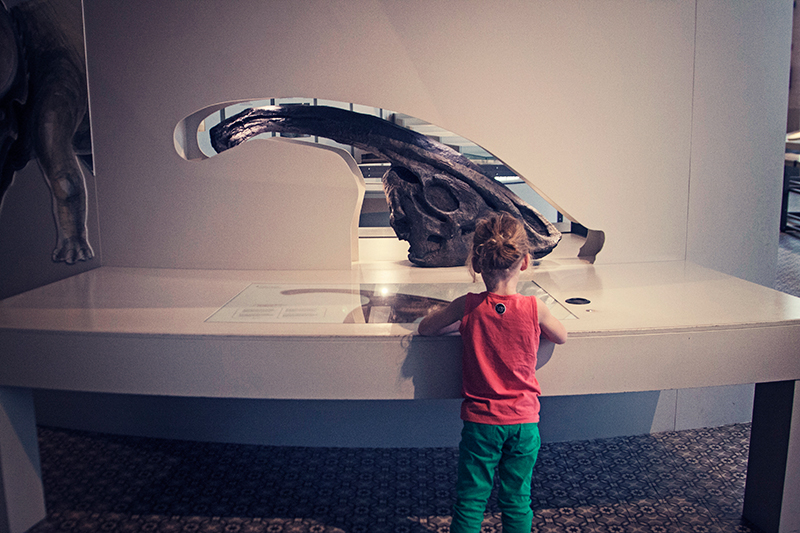 Naturkundemuseum Brüssel