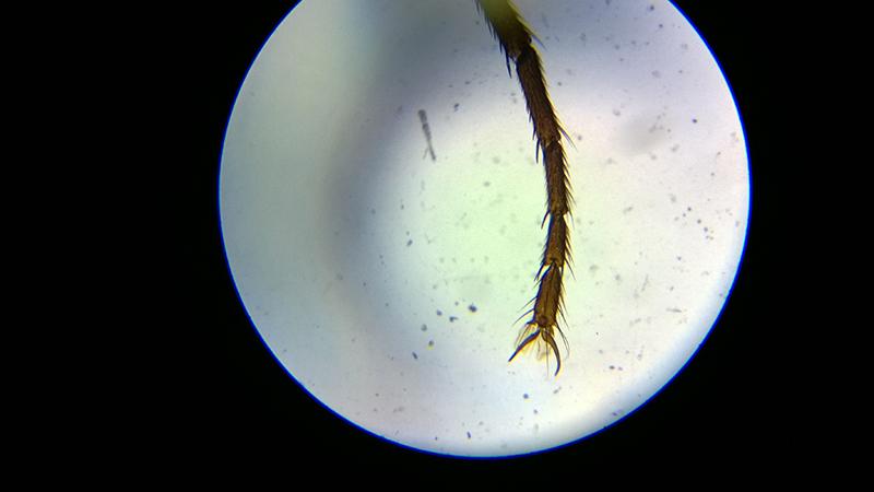 Blick durch´s Mikroskop