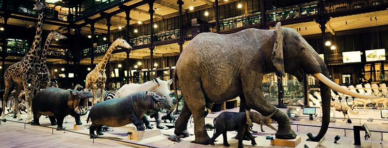 Naturkundemuseum Paris - Foto: Muséum national d'Histoire naturelle