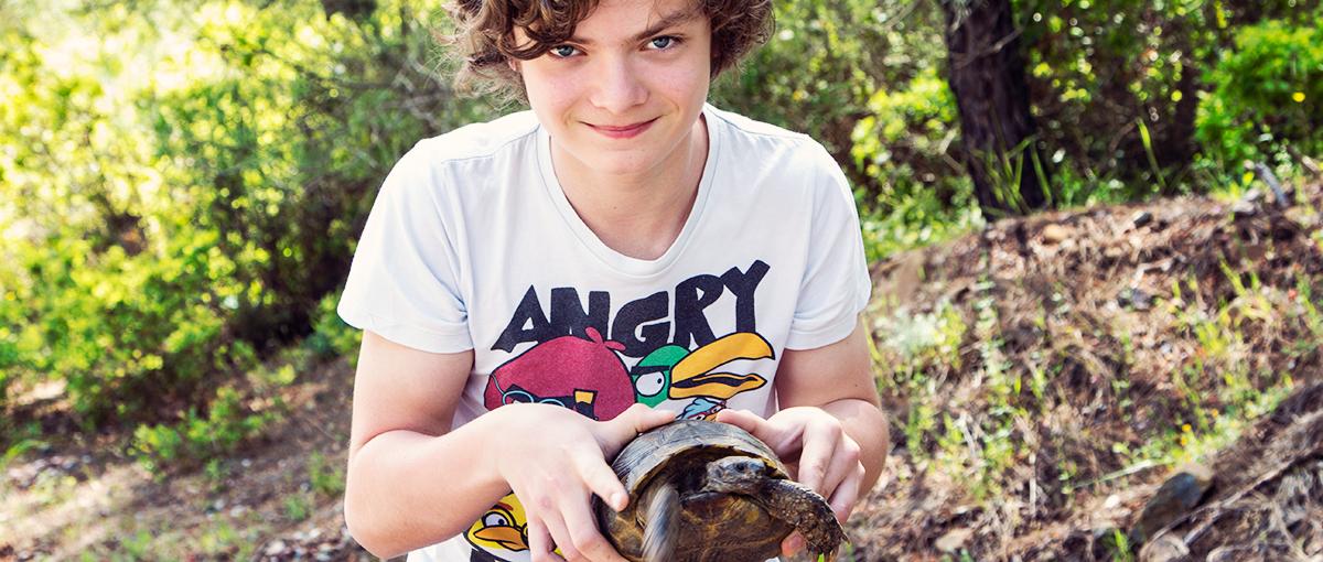 Schildkröten Türkei