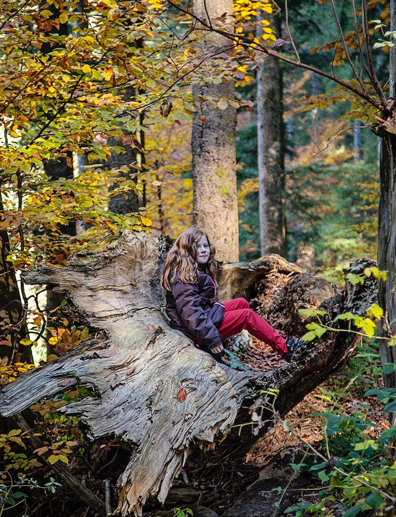schwarzwald riesenbaum