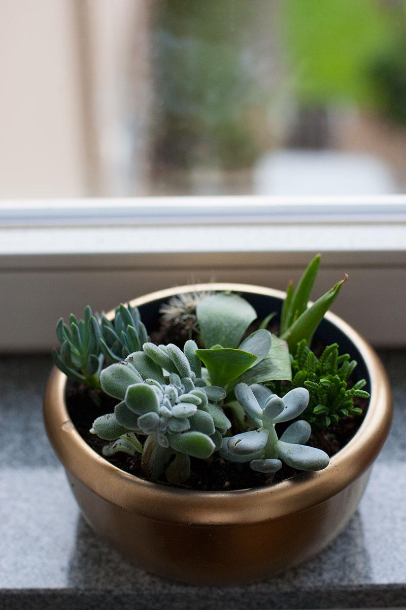 DIY minigarten
