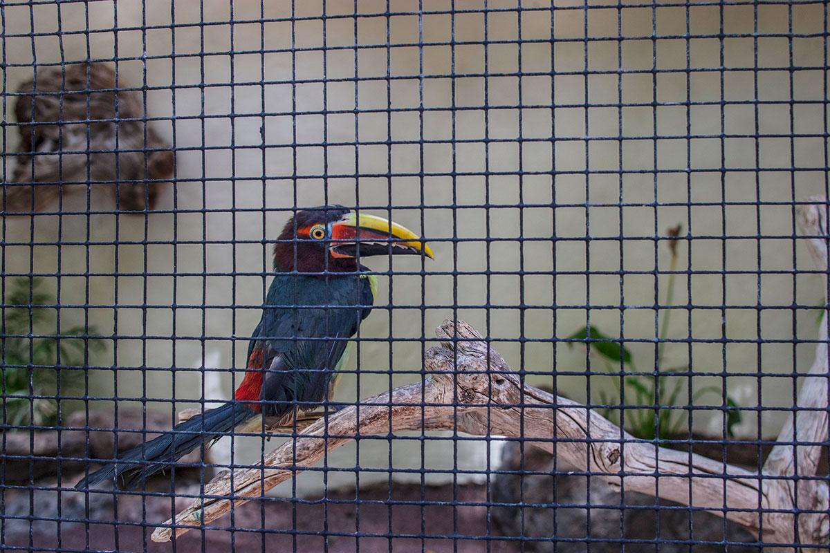 gran canaria tipps palmitos park