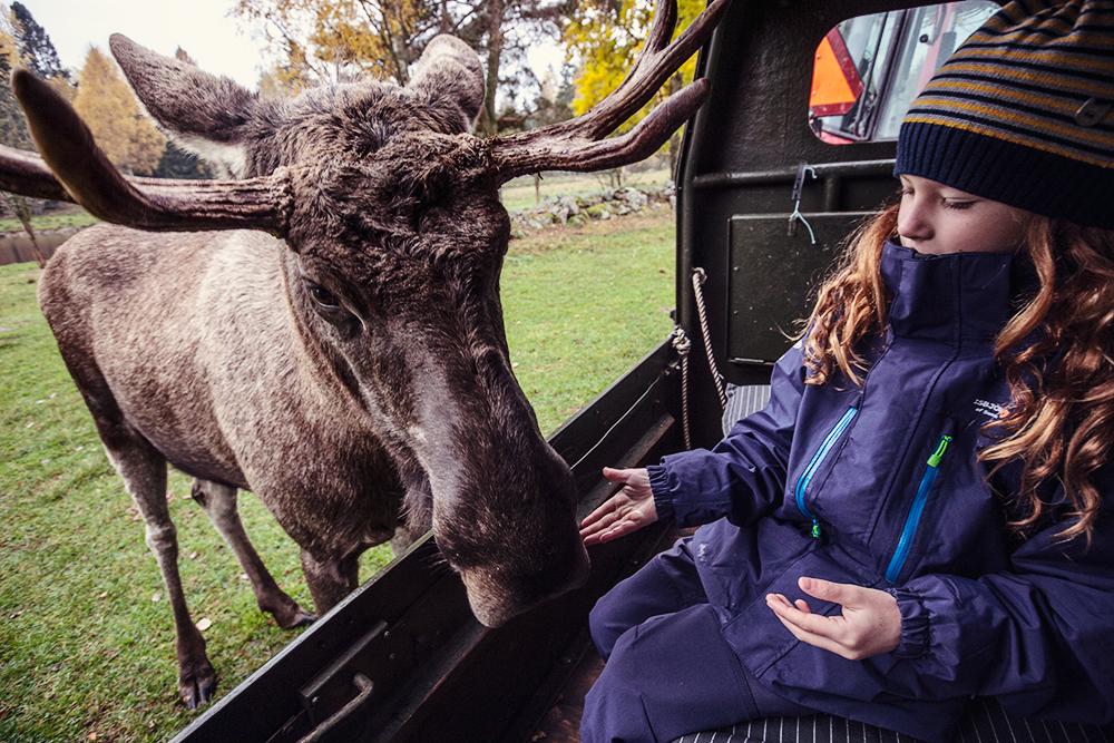 schweden mit kindern elchfarm