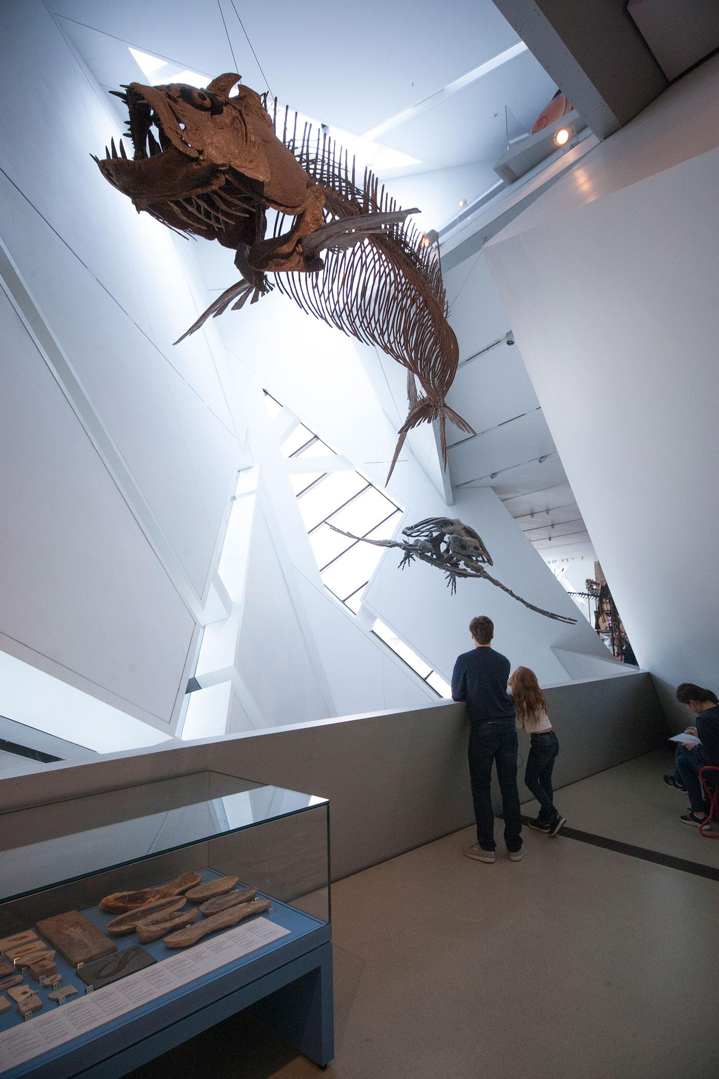 rom toronto dinosaurs