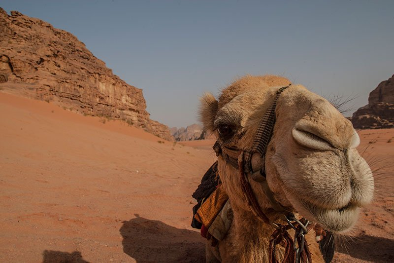 reisetipps jordanien kamel