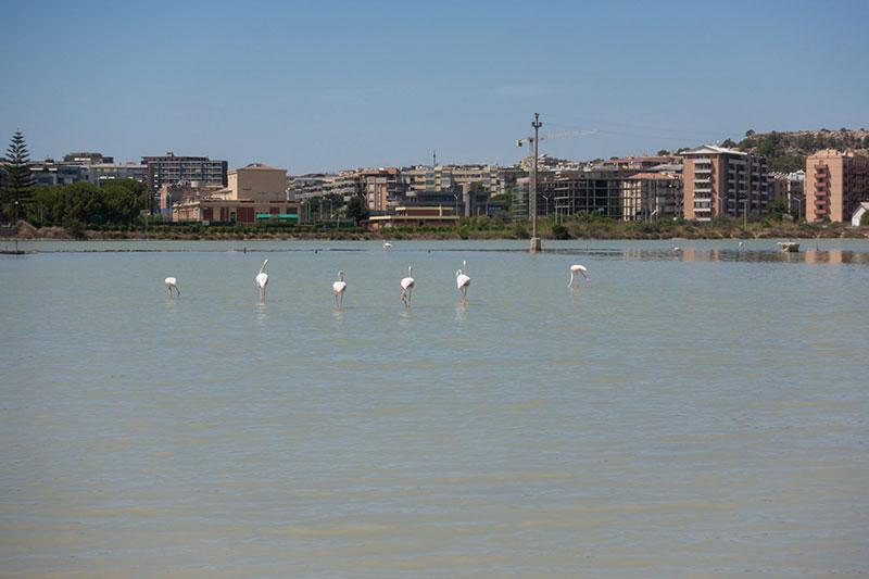 flamingos sardinien hochzeitsreise