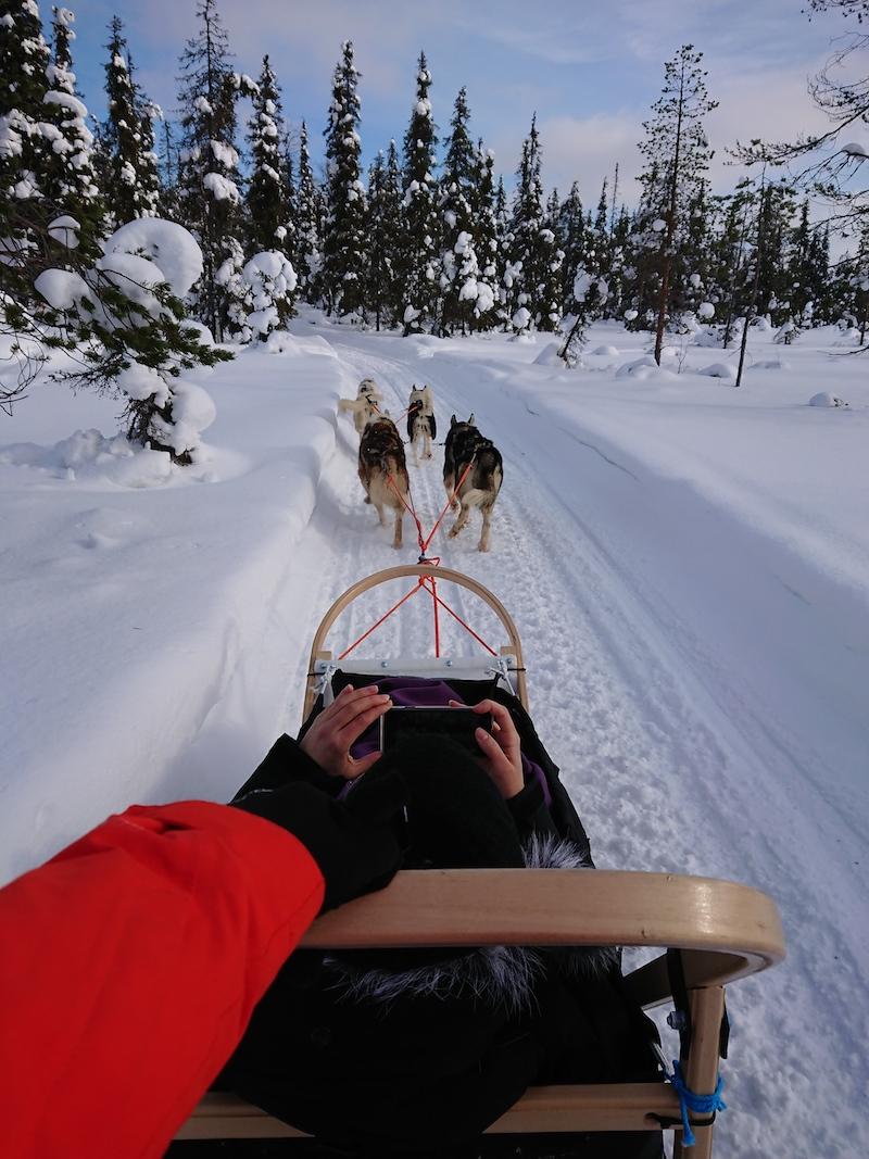 Hundeschlitten Finnland