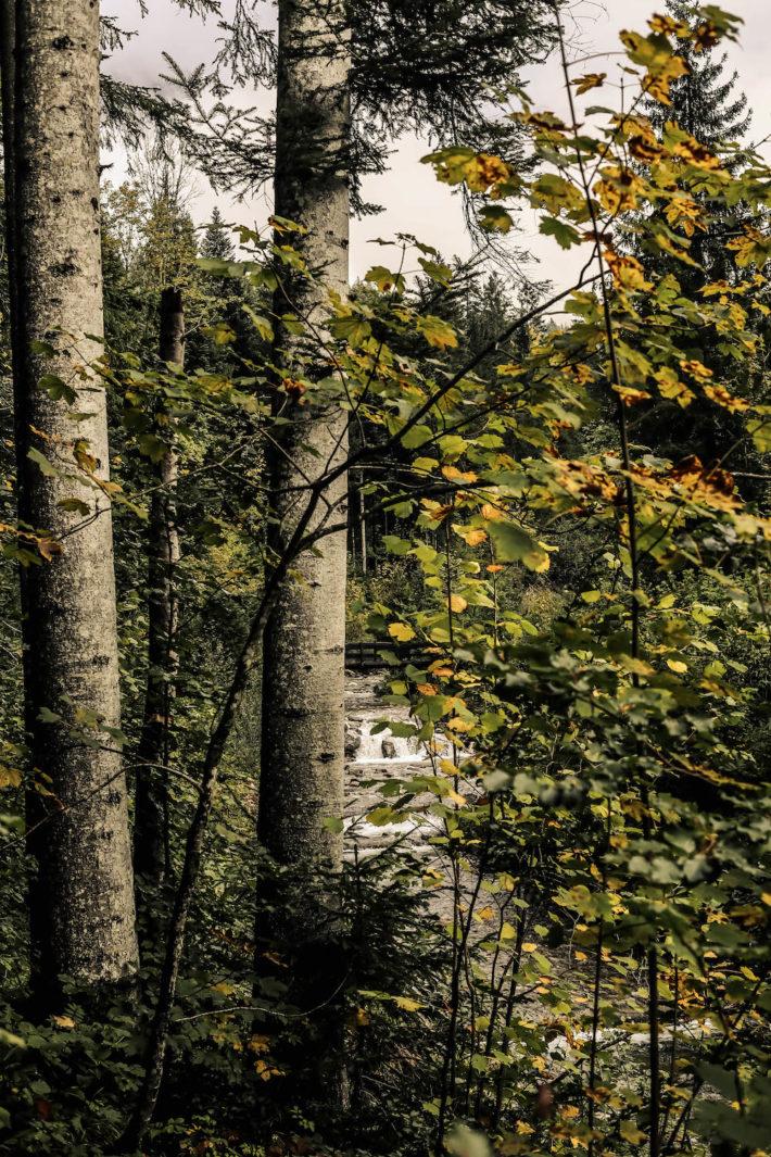 Kaiserlodge Scheffau Waldbaden
